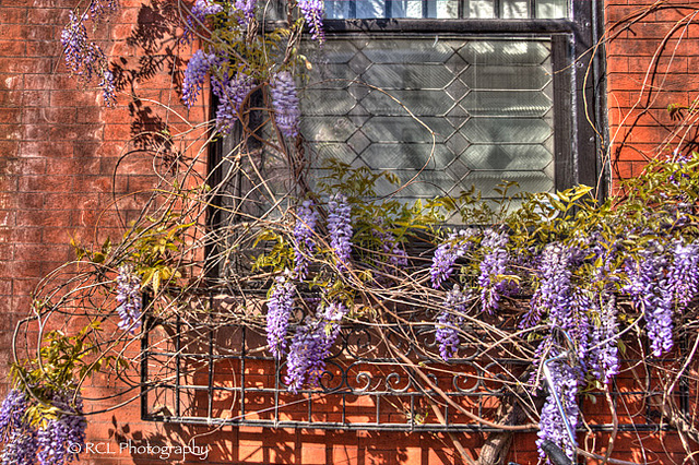 Wiisteria | Rob Lybeck, Eyes on the Street Flickr group