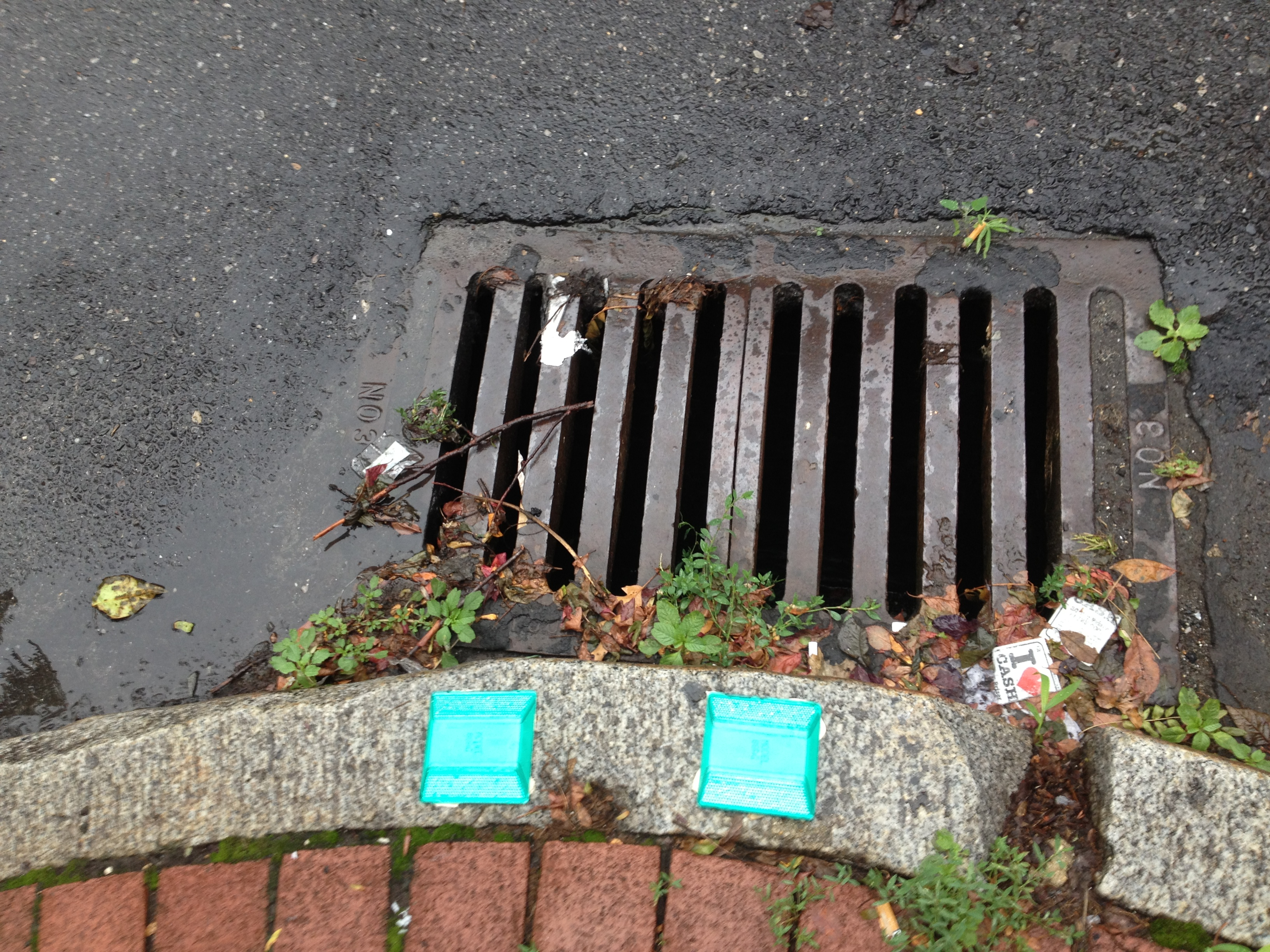 Green reflectors at storm drains trace the outflow pipe.