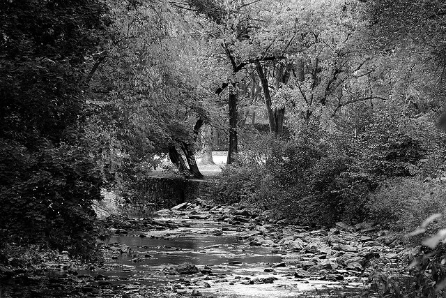 Along the creek in Lawncrest | Flickr user Chambo25 | Creative Commons