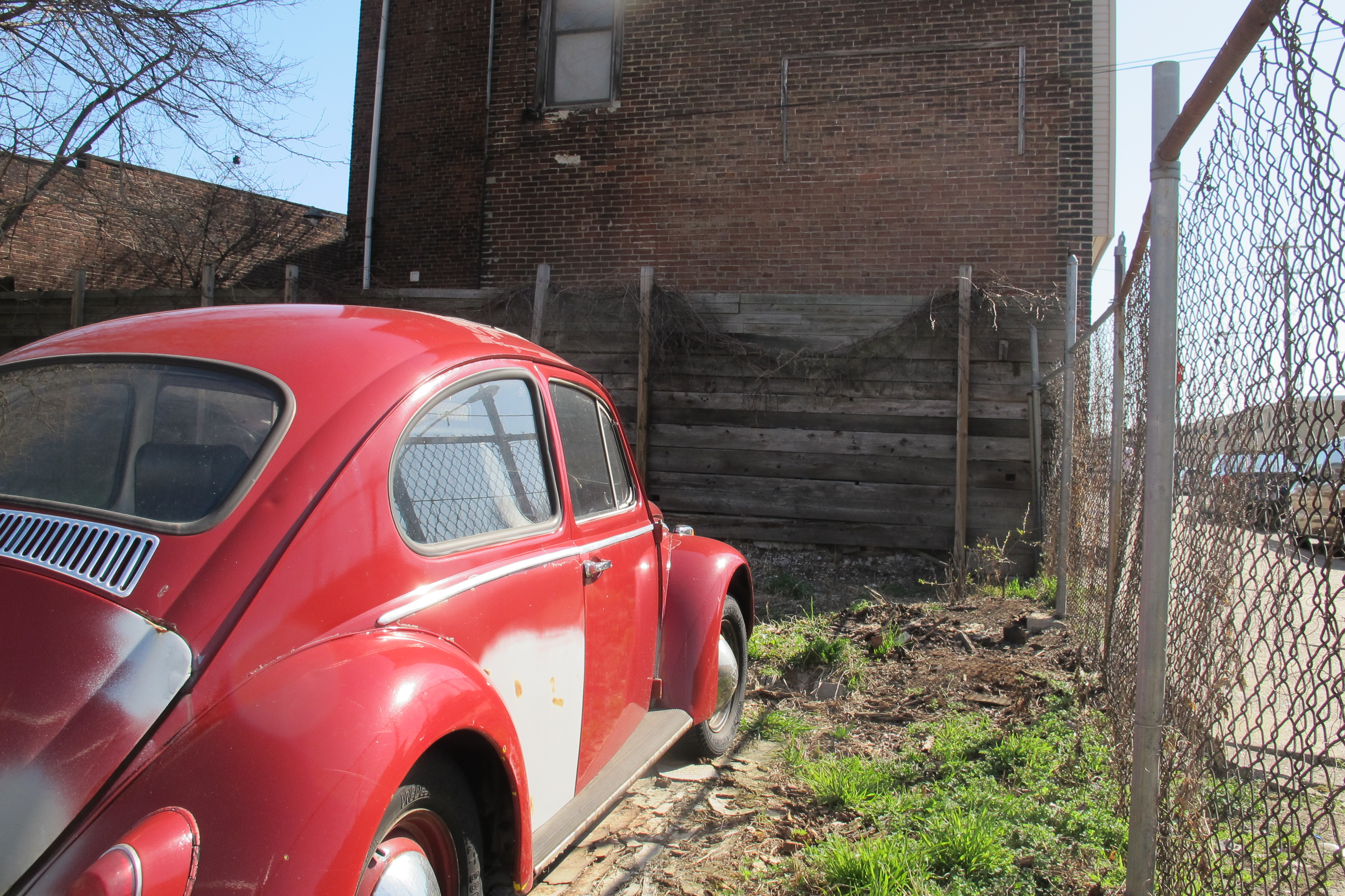 Bug on a vacant property in Point Breeze.