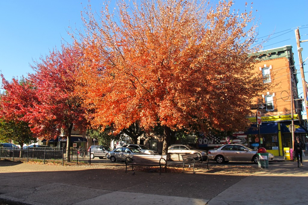 Fall color, 4th and Bainbridge. | join EOTS on Flickr