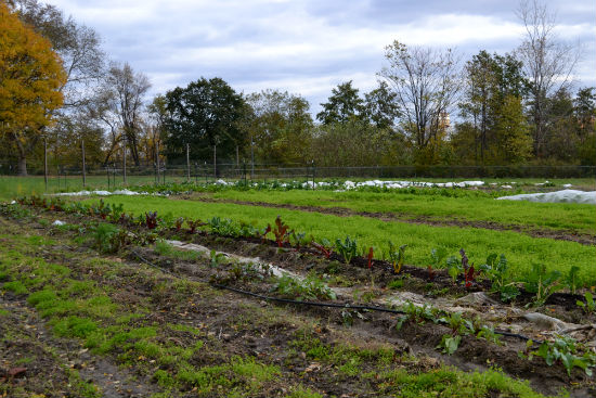 In its first year, the farm produced approximately 6,500 pounds of fresh food