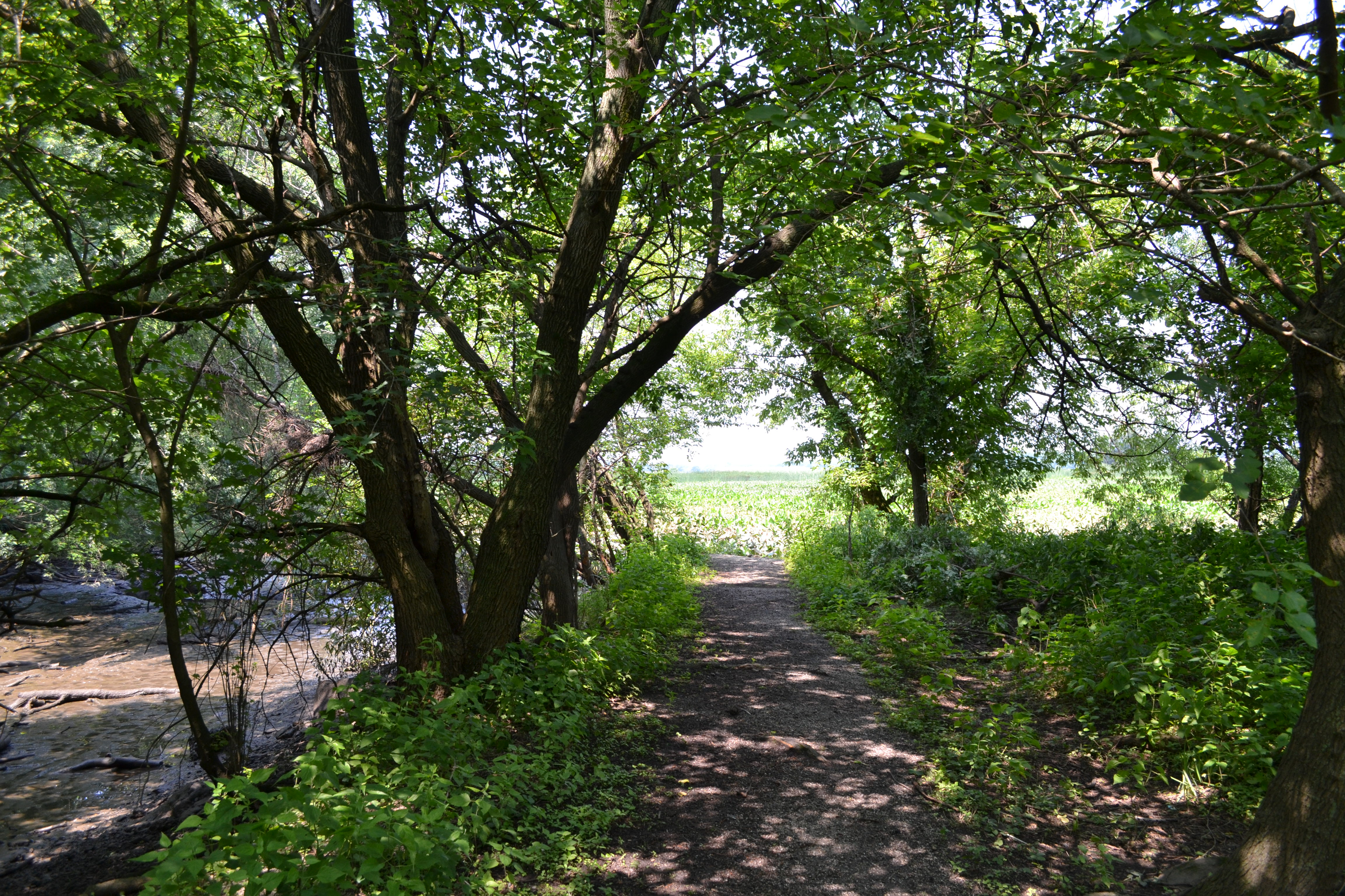 In some places shady trails lead to the seemingly endless marsh