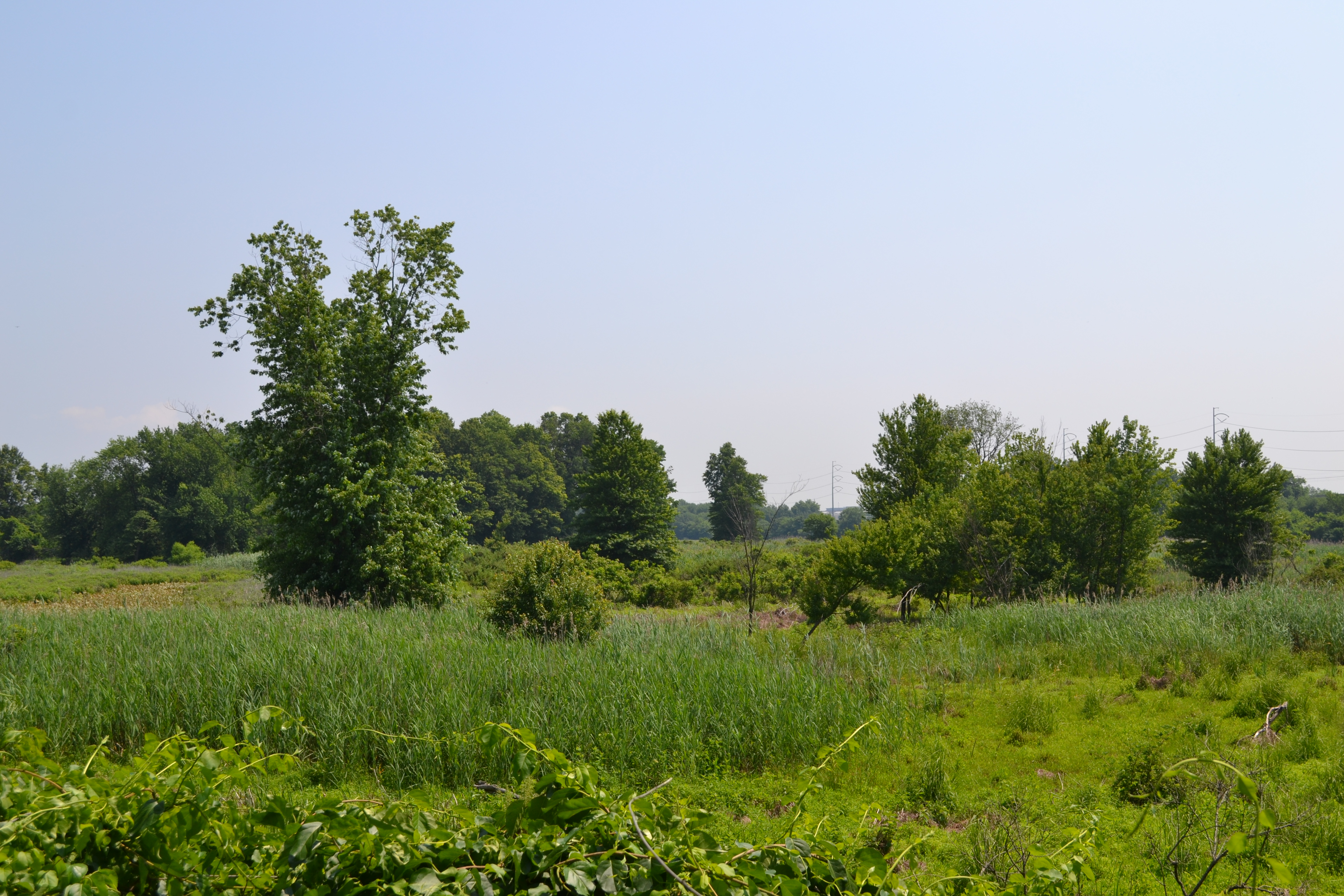 In total the refuge today is made of nearly 1,000 acres of woods, ponds, marsh and meadow