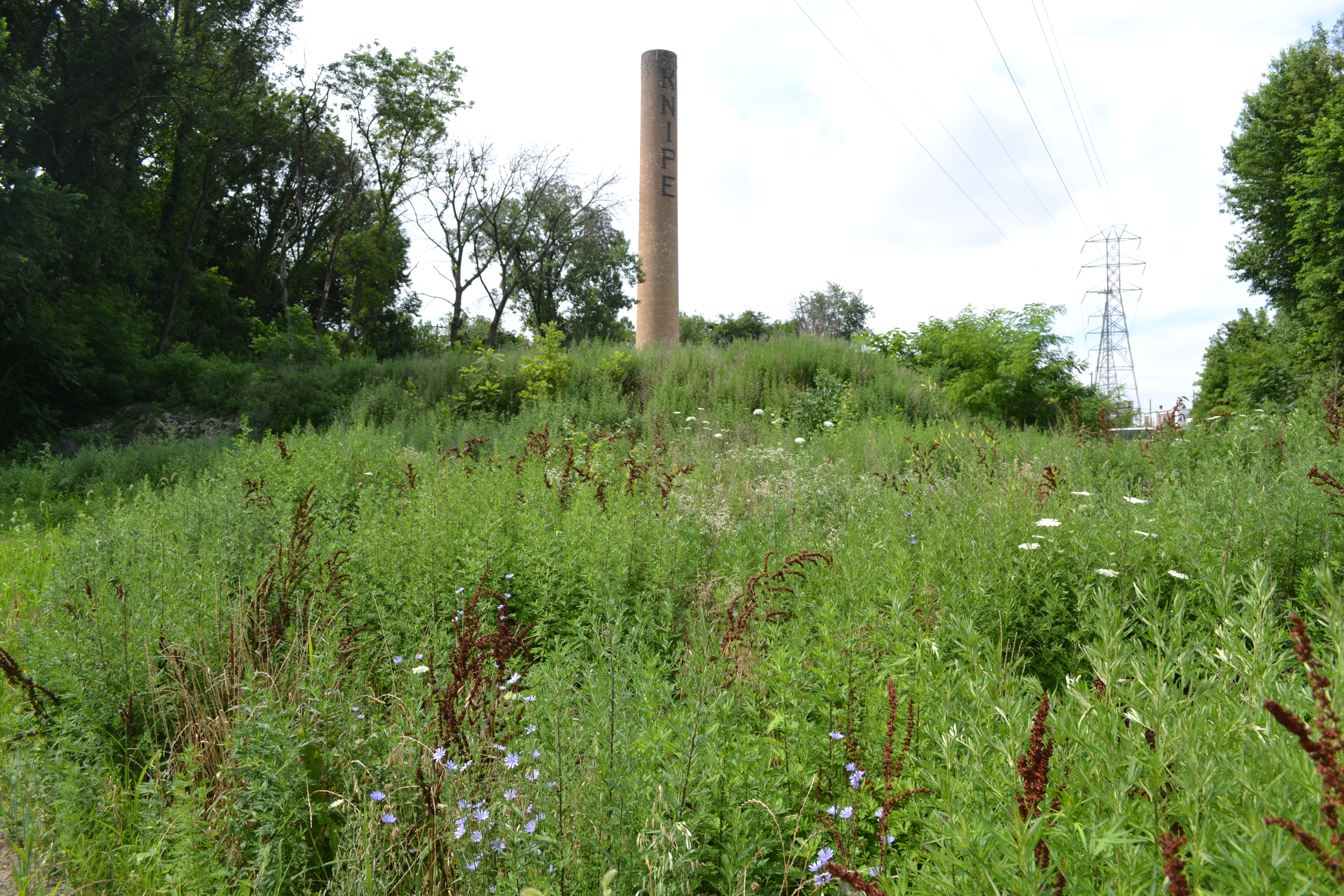 Tacony Creek Trail, The trail's meadows provide a prime habitat for birds and insects