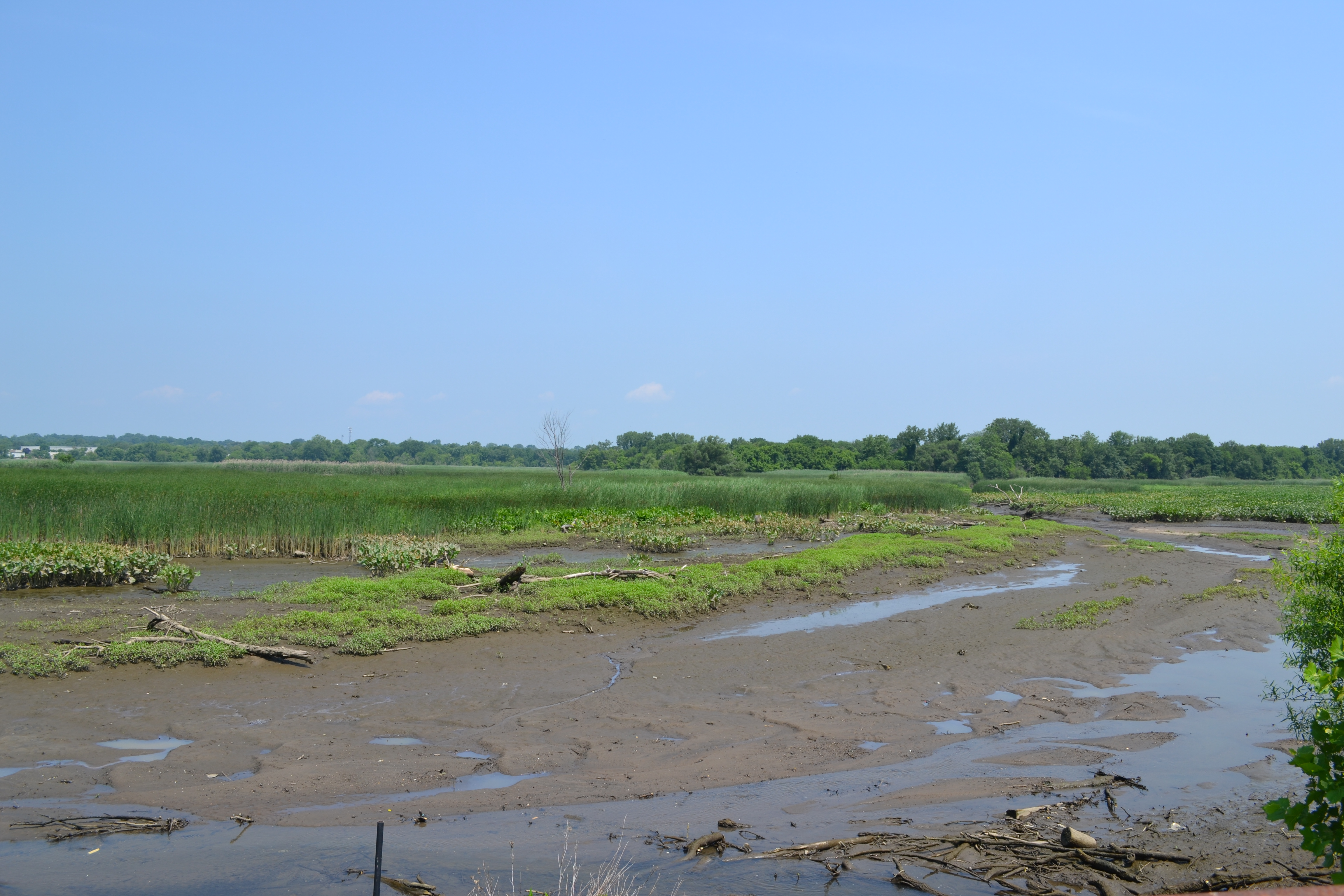The marsh is rare in that it is both tidal and freshwater