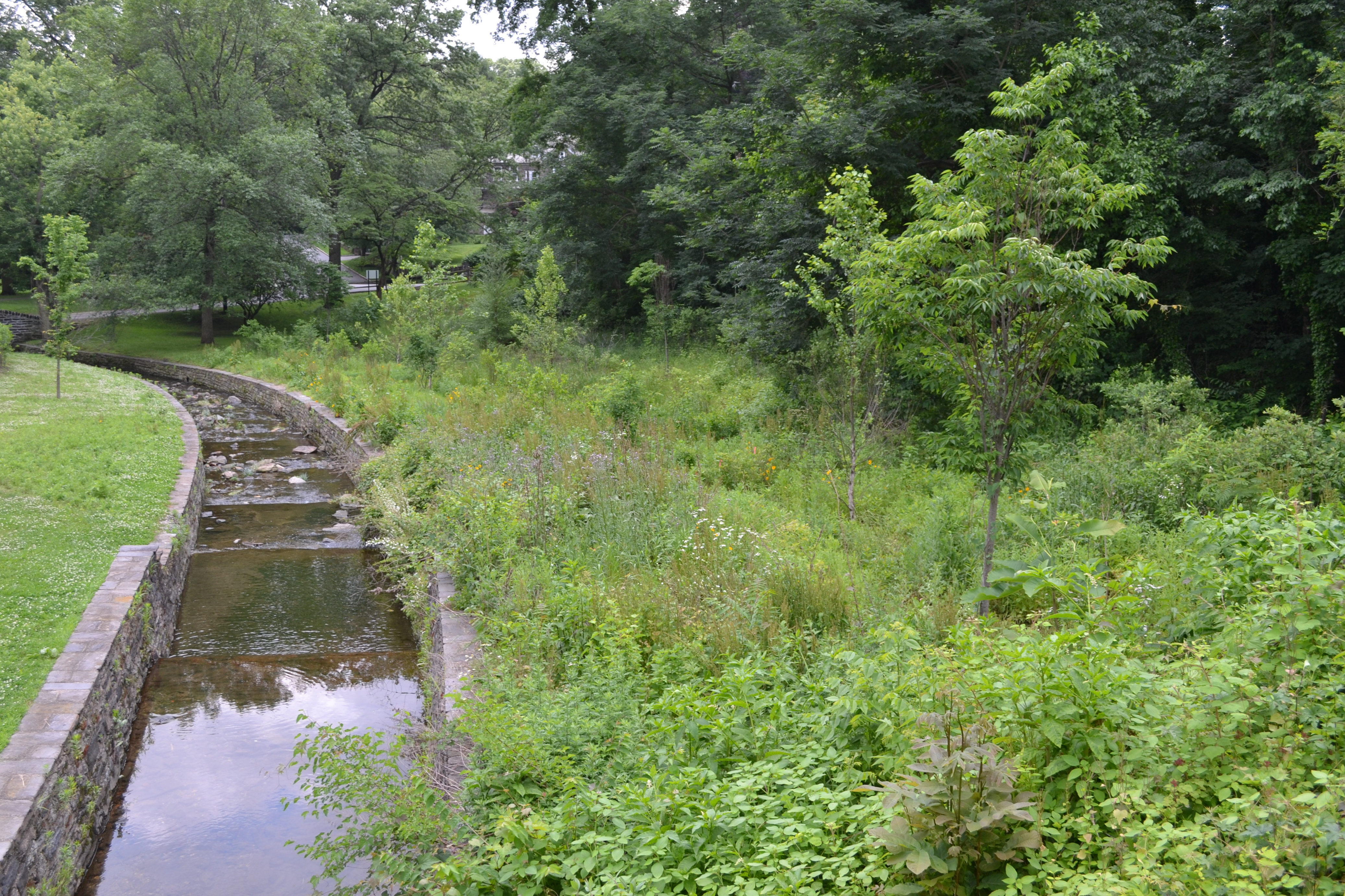 Vine Creek intersects with the trail at several points before it feeds into the Schuylkill River