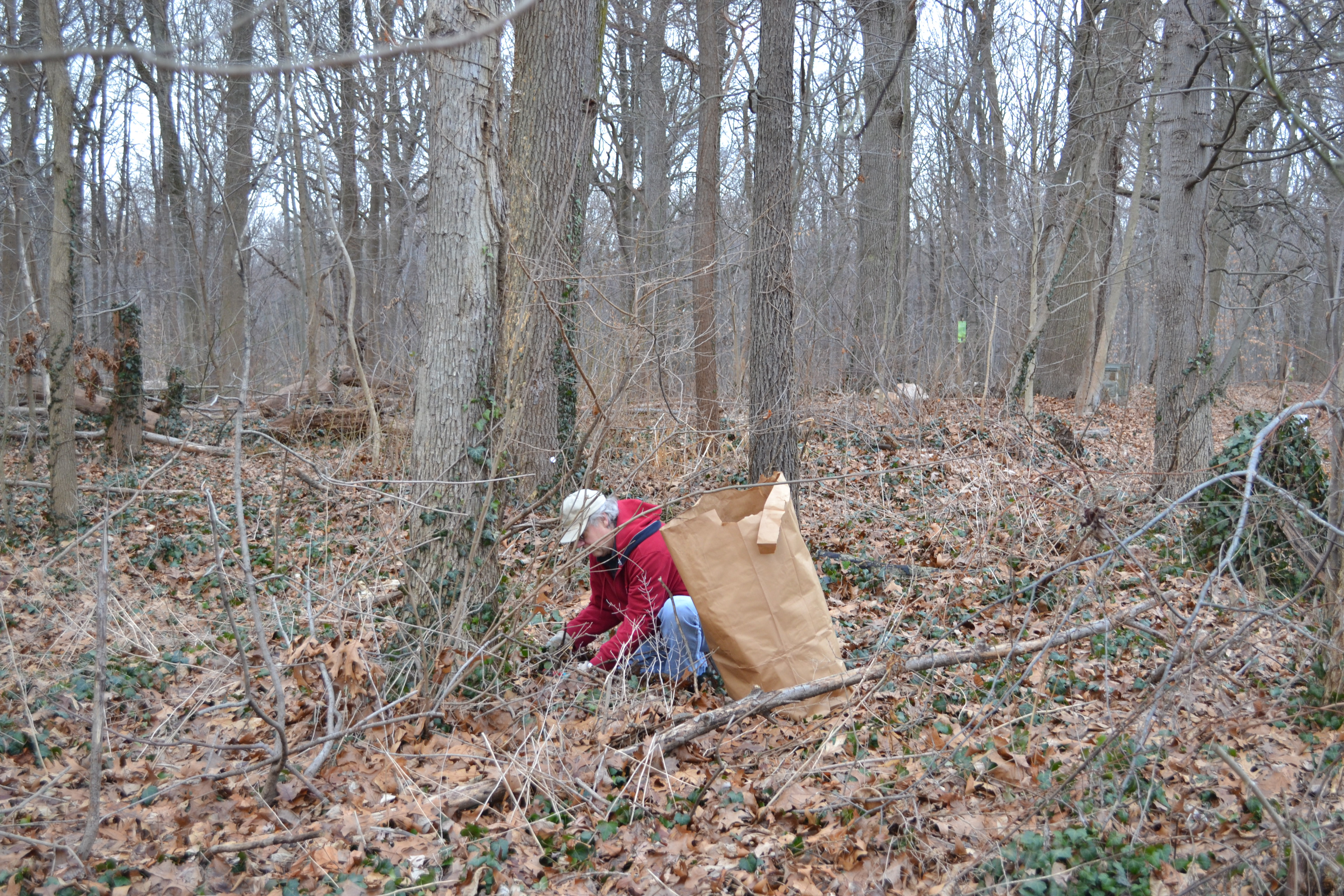 Friends of Carpenter's Woods cleanup