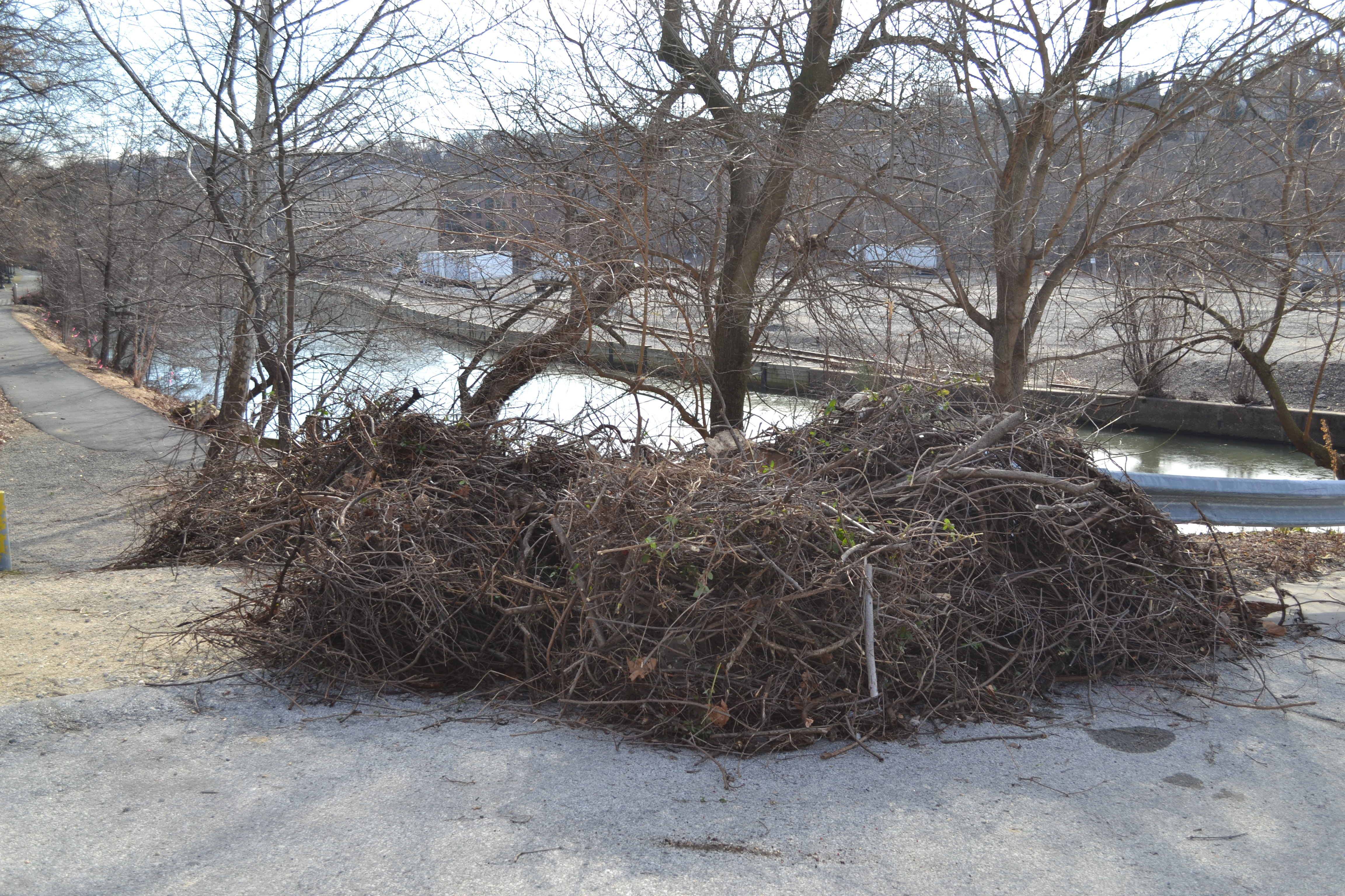 Ivy Ridge Green cleanup