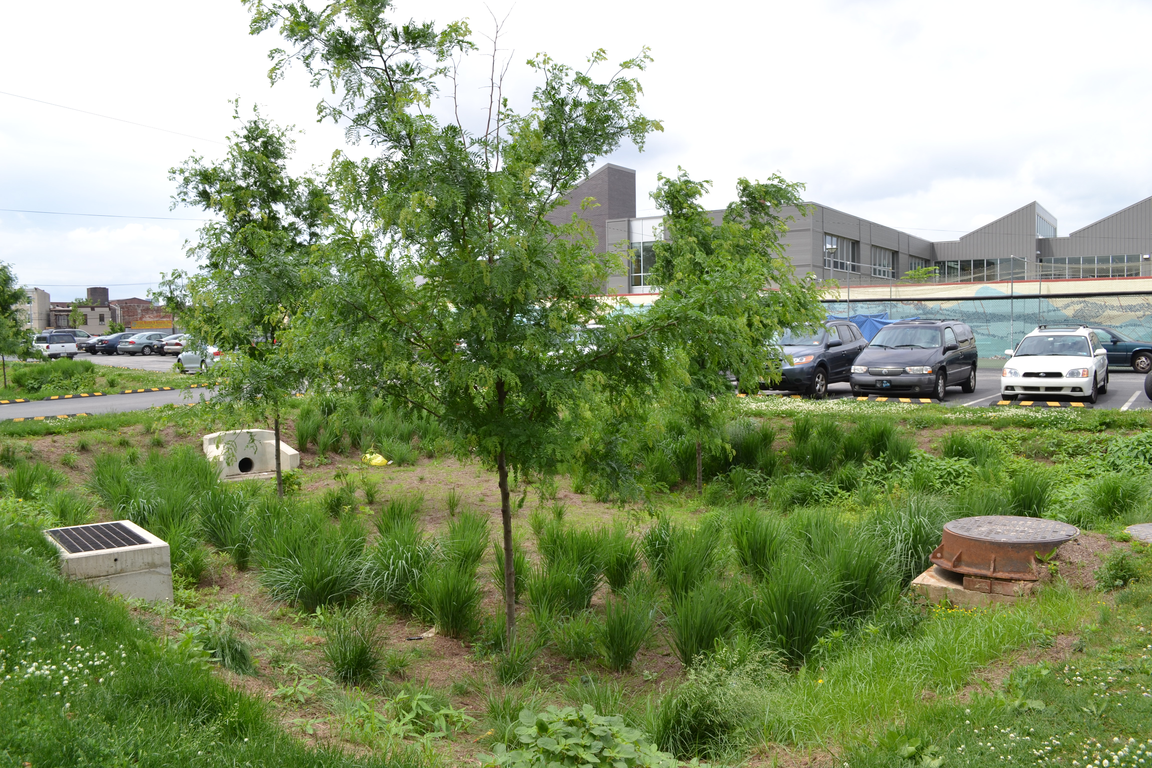 Stormwater tree trench at Shissler Rec Center