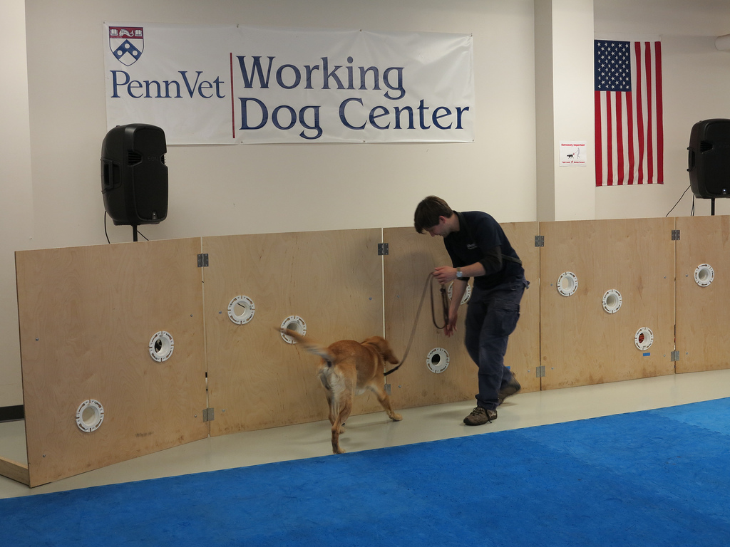 The dogs are being trained to detect everything from cancer to drugs and explosives using scent