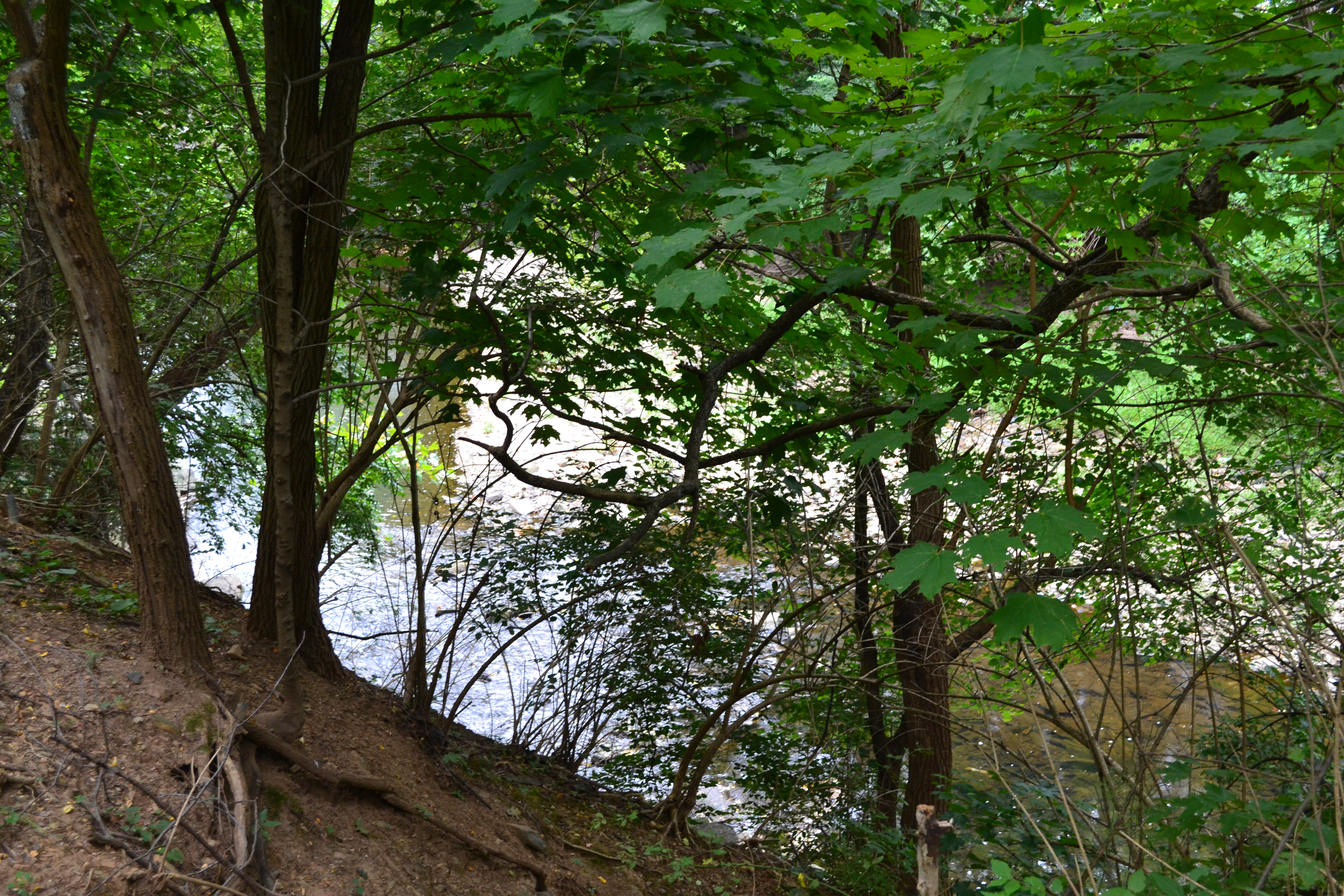 The off-road trails offer glimpses of Cobbs Creek