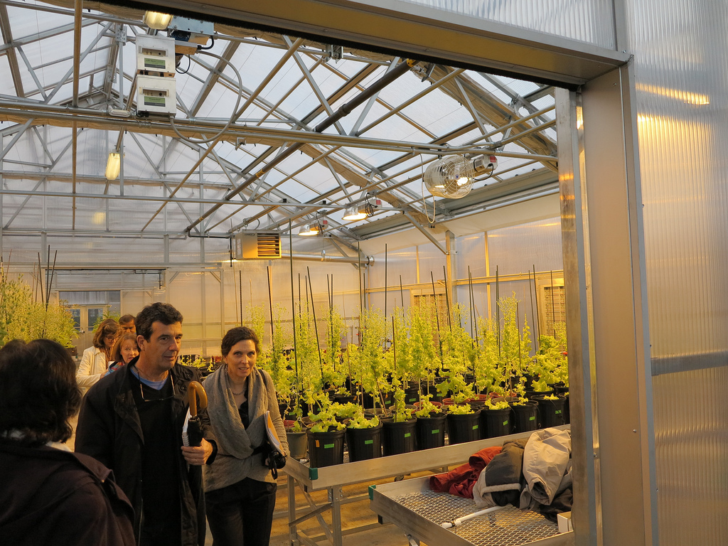 The plants growing in the Penn Dental Research Greenhouse have the potential to treat or cure diseases like cancer, hemophilia, diabetes and polio