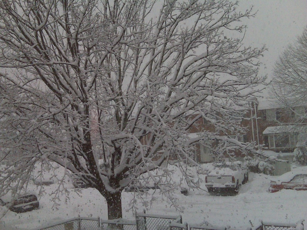 The view at Kenny and Elnora roads in Parkwood, submitted by a NEast Philly reader.