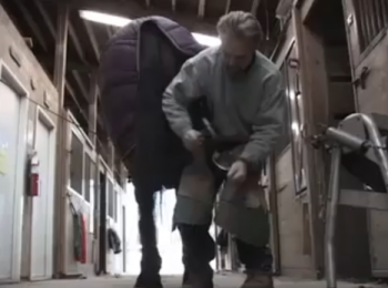 A journeyman farrier, Jon Weiler removes and replaces horse's shoes.