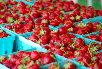 Summer brought strawberries to the Oxford Circle Farmers Market. It and the Frankford Farmers Market opened this year with help from the Food Trust. Photo by Ben Bergman.